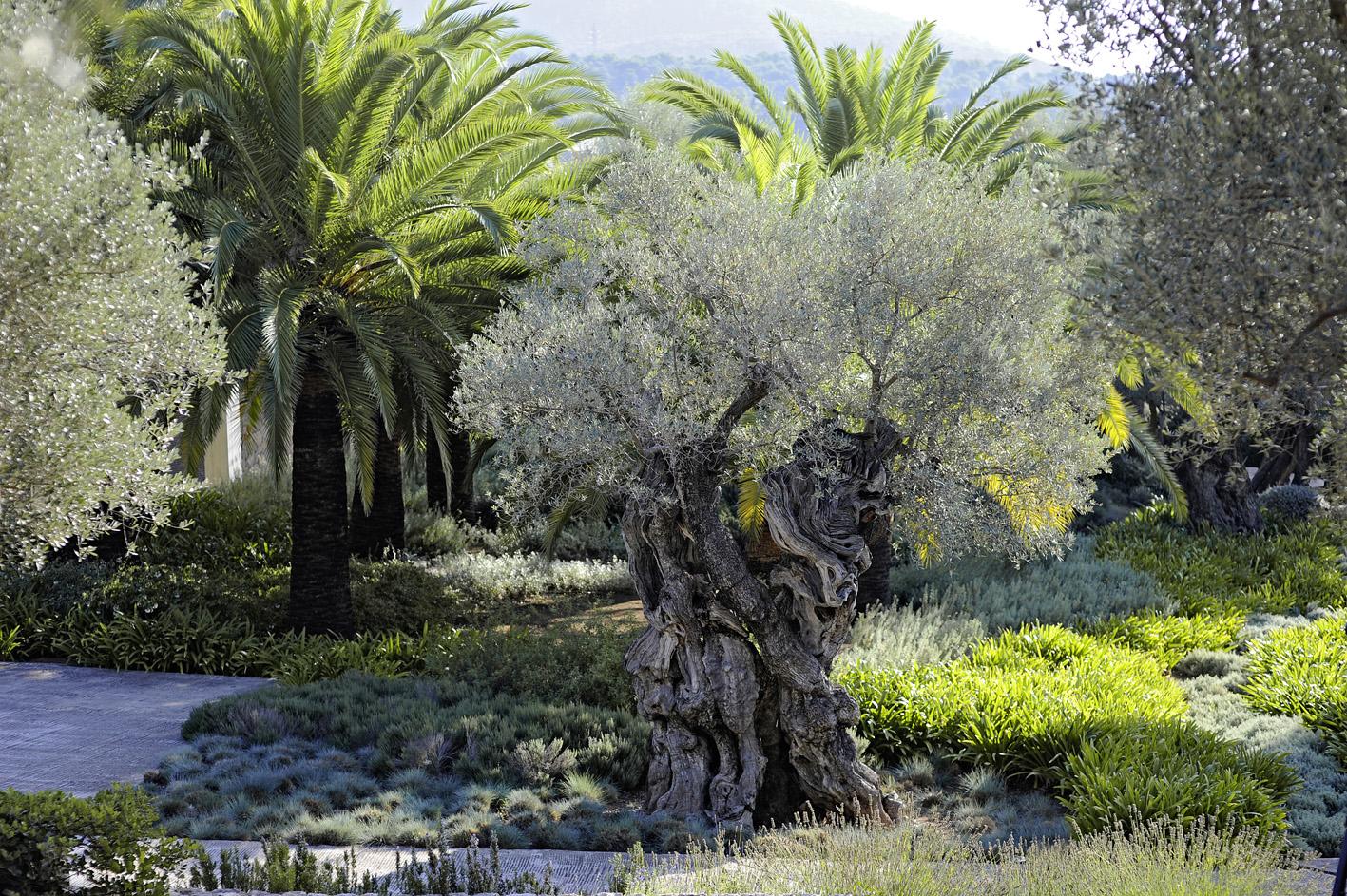 design : Jardins de Tramuntana